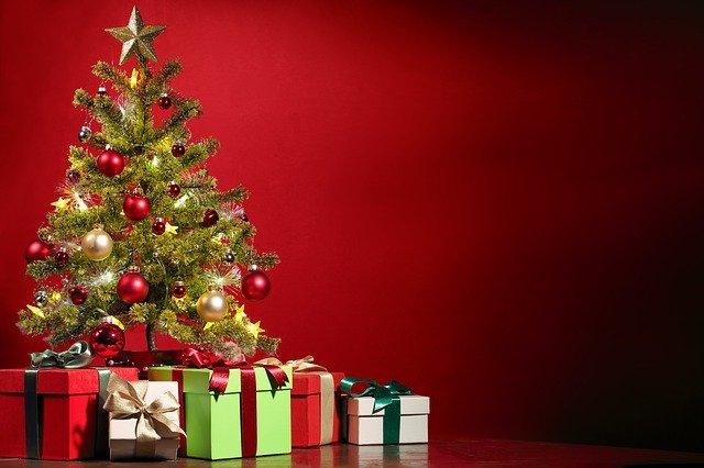 Weihnachtsgeschenk Vitalpilze